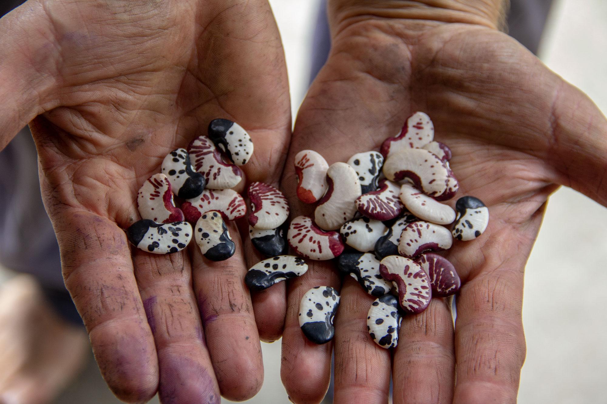 La revolución de la semilla
